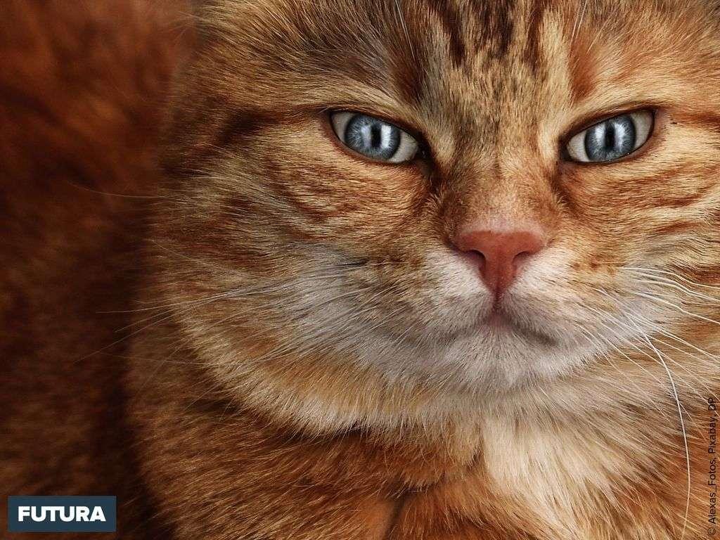 Le chat, fascinant, apaisant un animal de compagnie parfait