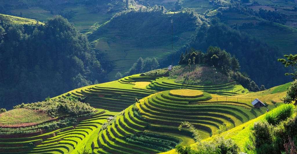 Le livre photo permet d'exprimer sa créativité. Ici, rizières au Laos. © RhuyHaBich, Pixabay, DP