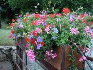 Une jardinière réussie aux quatre saisons. © DR