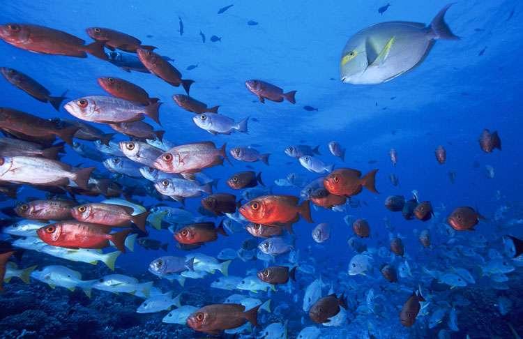 Banc de poissons dans l'atoll de Fakarava