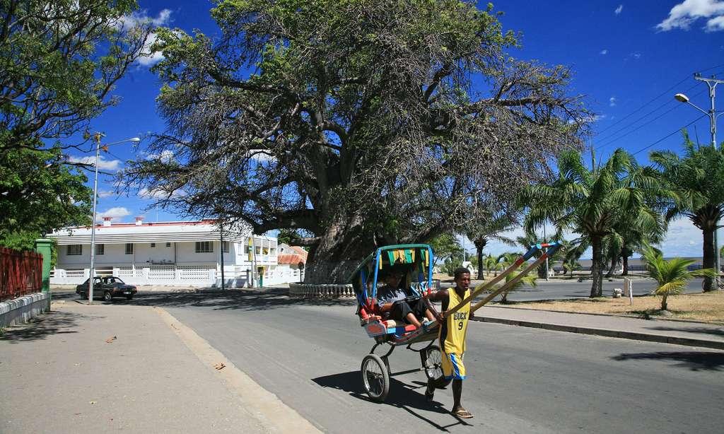 Baobab de 800 ans de Majunga