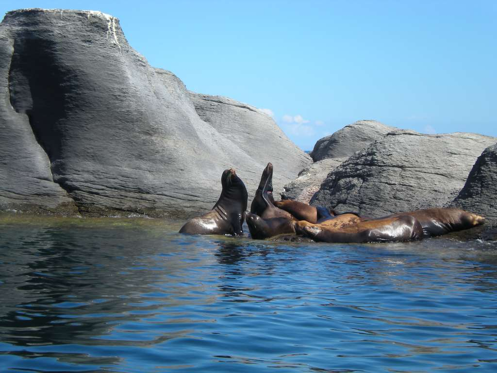 Le parc national Bahia de Loreto se trouve en Basse Californie, au Mexique. Il abrite 30 espèces différentes de mammifères marins, et constitue un véritable sanctuaire d'oiseaux. © Josephwaynebarrett, Flickr, cc by 2.0