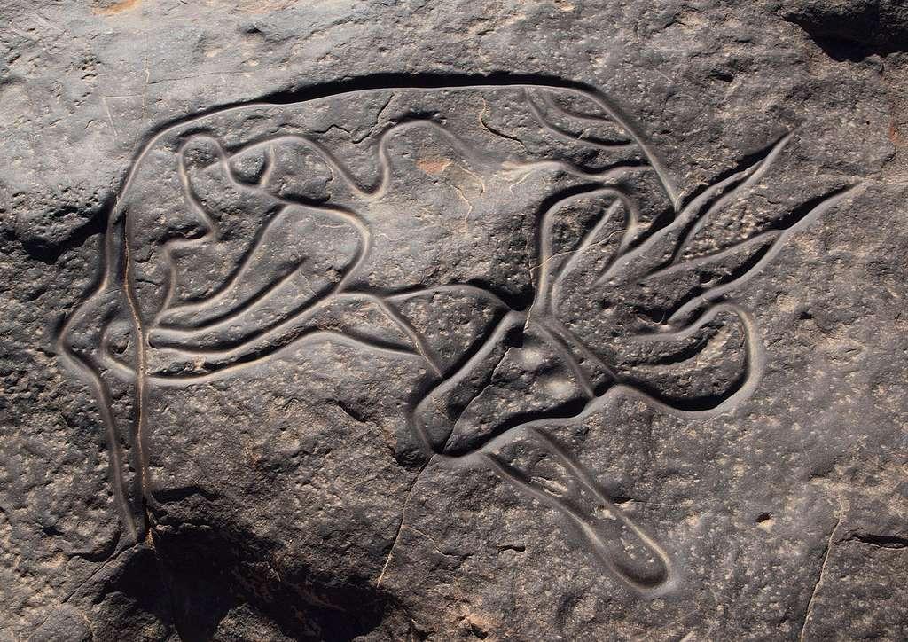 Gravure rupestre appelée Gazelle couchée, à Tin Taghirt, sur le Tassili n'Ajjer, en Algérie. © Linus Wolf, Wikipédia, GNU