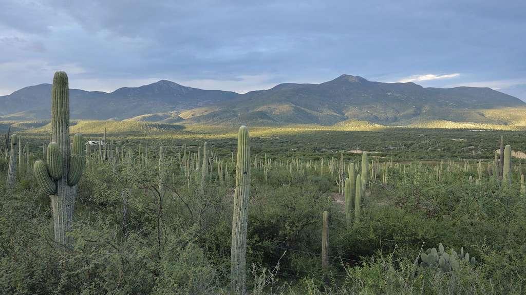 Mexique : la vallée de Tehuacán-Cuicatlán et son habitat originel de Méso-Amérique