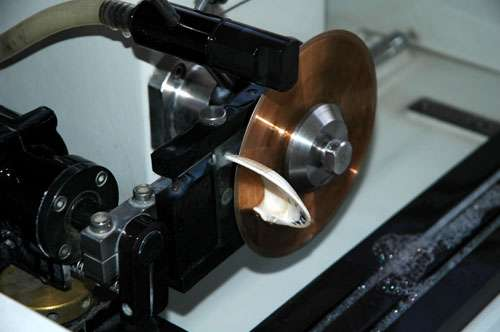 Valve de coquille en train d'être découpée avec la scie de précision (Minimet, ® Buehler). © C.E. Lazareth, IRD. Reproduction et utilisation interdites