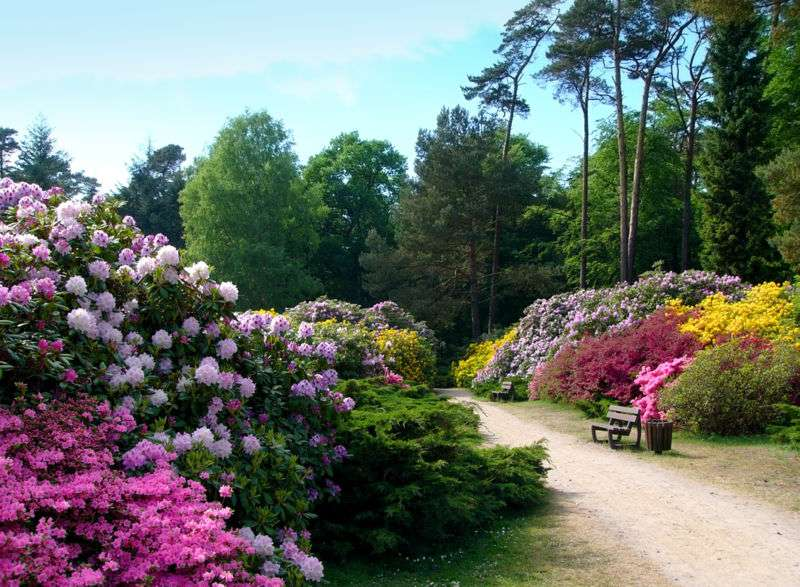 Le Rhododendronpark de Graal-Müritz, en Allemagne