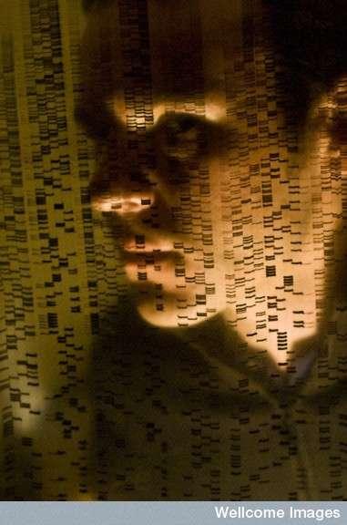 Le génome de nos ancêtres est presque identique au nôtre, et l'on peut facilement différencier l'ADN des Hommes de celui des bactéries à l'aide de sondes adaptées. © David Nelson, Wellcome Images, Flickr, cc by nc nd 2.0
