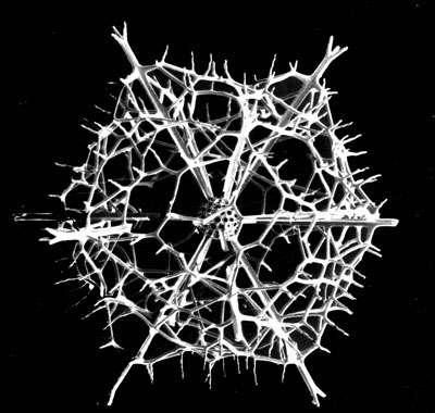 Fragment de radiolaire vivant actuellement dans les mers. On notera la qualité de la préservation qui confère une allure très lisse aux épines. © MNHN