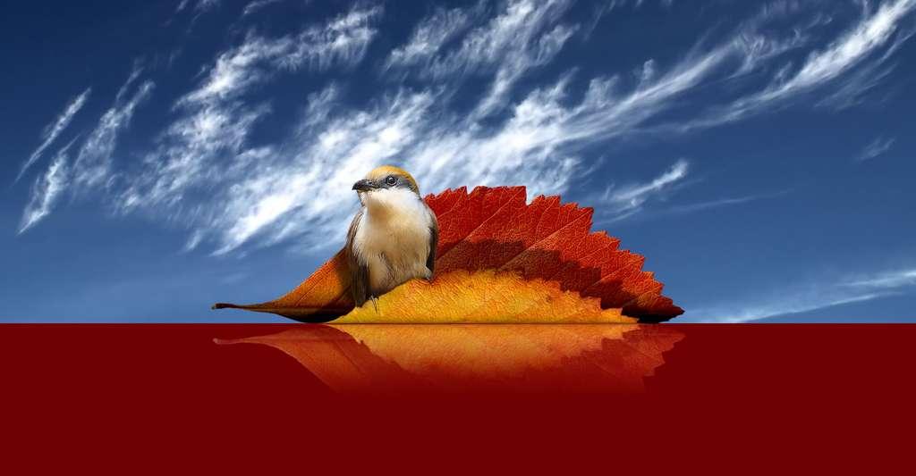L'automne est une saison magnifique. © DR