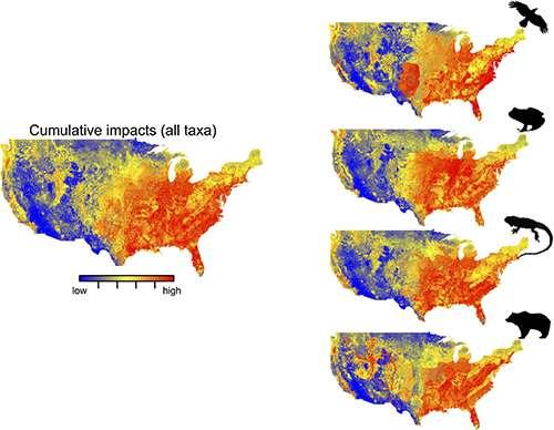 Modélisation des risques cumulés des changements globaux sur la biodiversité aux États-Unis (à gauche) et sur les amphibiens, les reptiles, les oiseaux et les mammifères (à droite) en 2080. Les valeurs des effets cumulatifs qui vont des valeurs basses (bleu) à élevées (rouge). © C. Bellard, C. Leclerc, F. Courchamp