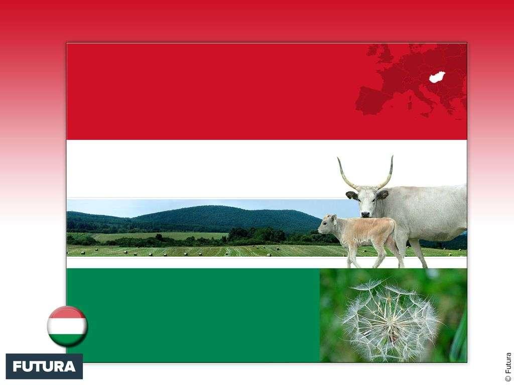 Drapeau : Hongrie