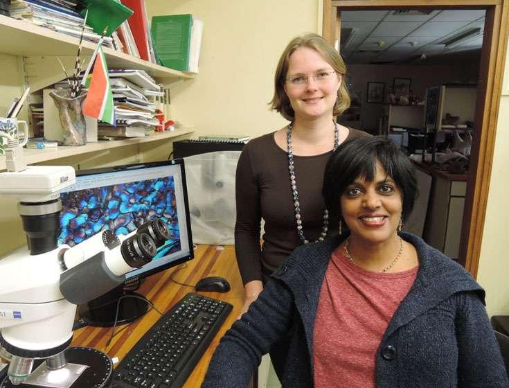 De gauche à droite, Delphine Angst et Anusuya Chinsamy-Turan, deux des auteurs de l'étude. Delphine Angst a auparavant travaillé sur le grand oiseau fossile Gastornis, démontrant qu'il était herbivore grâce à l'analyse isotopique de ses os. © DR