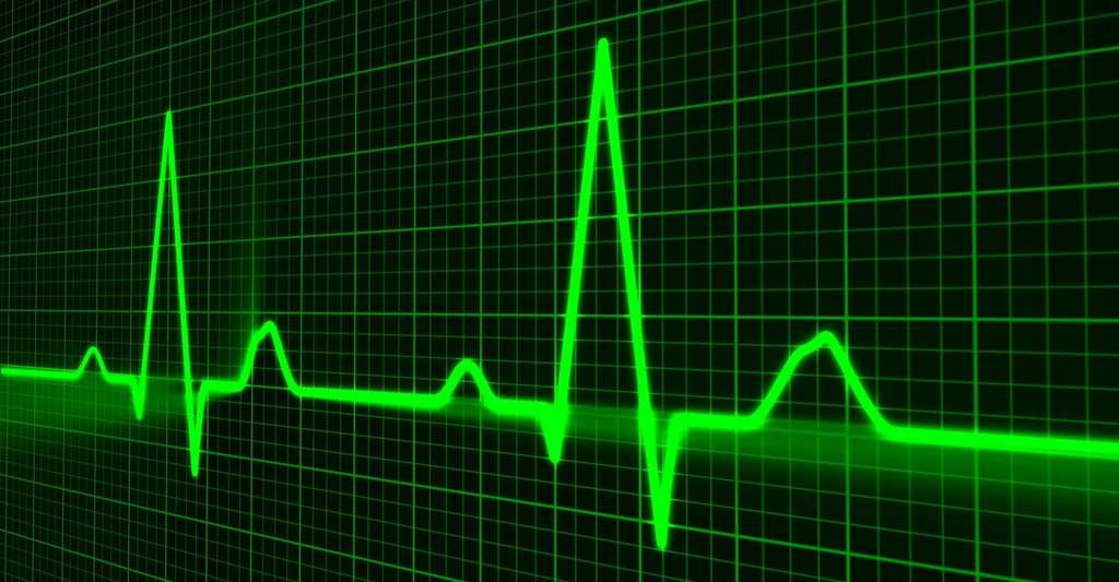 Un cœur au repos bat environ 1 fois par seconde. © PublicDomainPictures, Pixabay, CC0 Creative Commons