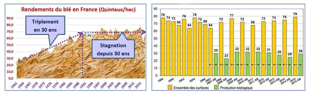 Les rendements des céréales sont maintenant stables en France depuis 30 ans, en « conventionnel » comme en « bio ». © Graphiques de Bruno Parmentier à partir des statistiques agricoles françaises. Tous droits réservés