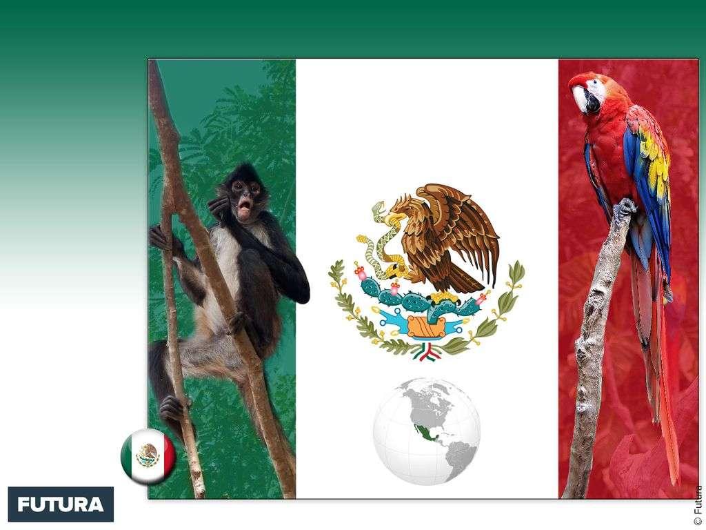 Drapeau : Mexique
