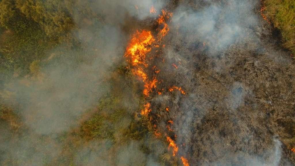 Un des moyens utilisés pour déforester est... l'incendie. © Alexpunker, Adobe Stock