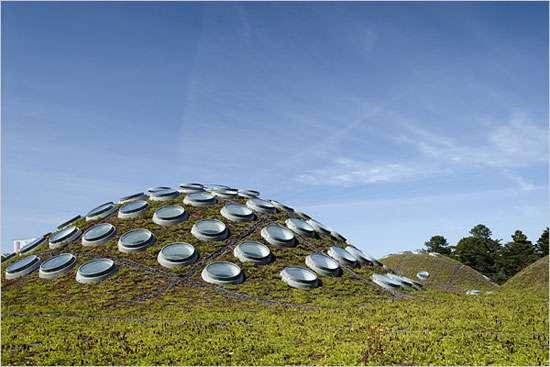 Le toit de l'académie des Sciences de Californie est entièrement végétalisé. Il comporte également des panneaux solaires. © Tim Griffith, tous droits réservés