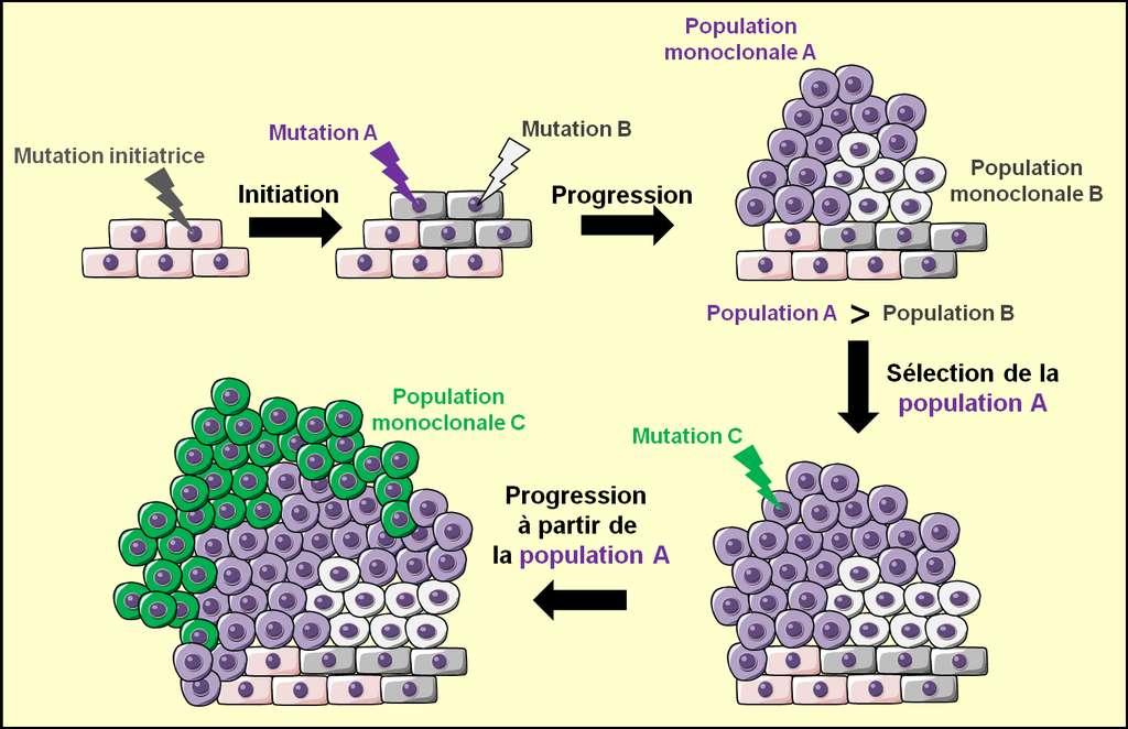 Figure 7. La sélection clonale. Une mutation initiatrice provoque l'apparition d'une population monoclonale de cellules transformées. Au sein de cette population, de nouvelles mutations apparaissent : la mutation A et la mutation B. La mutation A est plus avantageuse que la mutation B et permet à la population qui la porte, la population A, d'être plus importante que la population B qui porte la mutation B. Cet avantage sélectionne la population A pour la poursuite de l'oncogenèse : c'est à partir de la population A que l'oncogenèse continue à progresser grâce à l'incidence de nouvelles mutations (mutation C). © Grégory Ségala