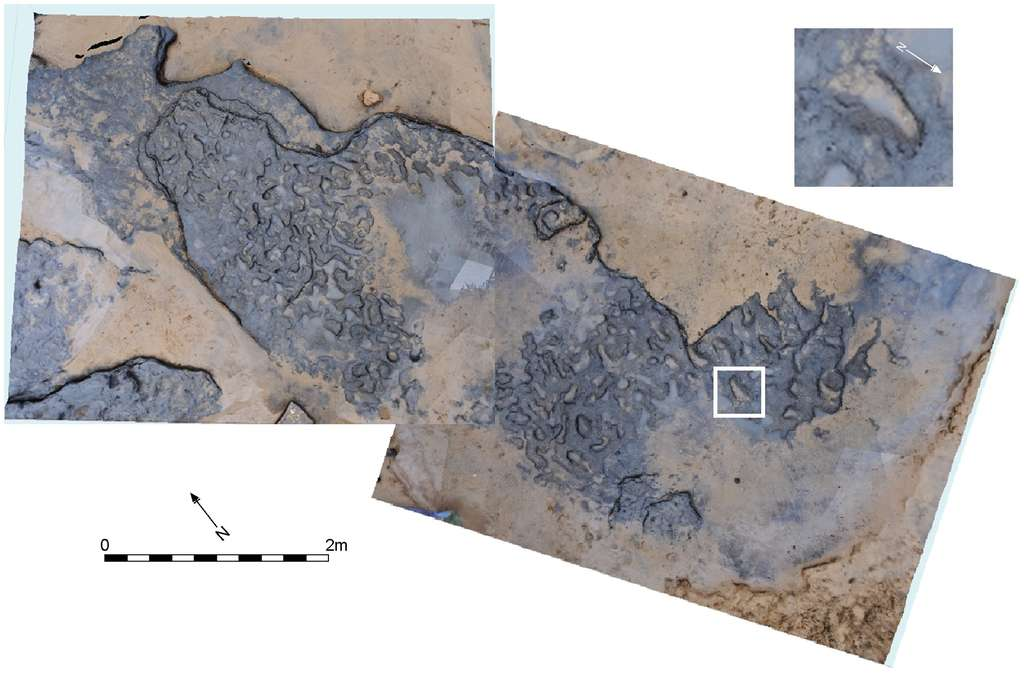 Les traces vues de dessus. Pour l'un des géologues de l'équipe, elles ressemblaient étrangement à des traces de pas humains. Une intuition qui s'est révélée exacte. © Nick Ashton et al., Plos One