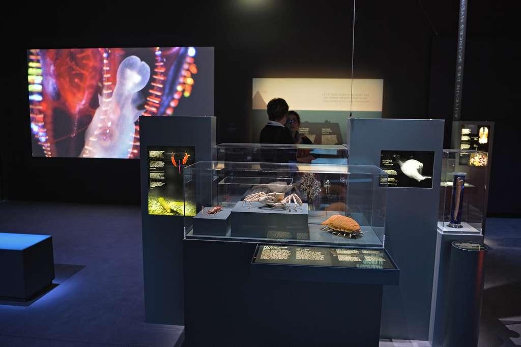 L'exposition « Océan : une plongée insolite » se tient au Muséum national d'histoire naturelle à Paris jusqu'au 5 janvier 2020. L'occasion de découvrir des facettes inédites des fonds marins, comme par exemple leur richesse inouïe en molécules potentiellement utiles pour le développement de nouveaux médicaments. © MNHN, J.-C. Domenech