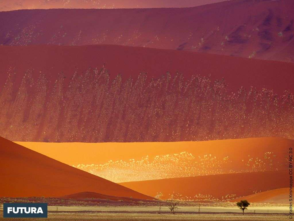 Dunes de sable dans le Parc National de Namib-Naukluft, Namibie