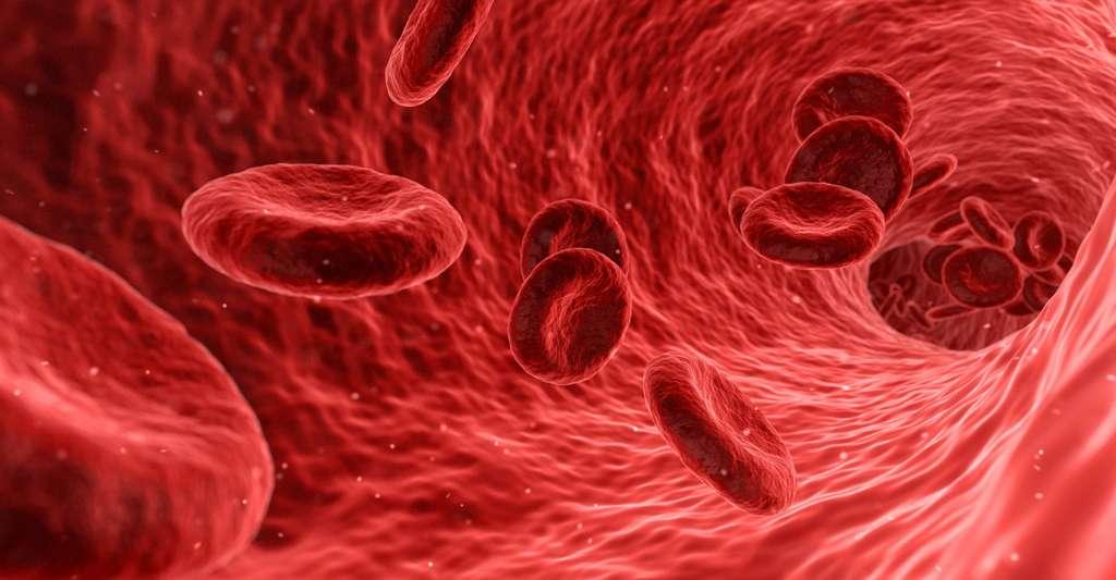 Cellules sanguines. © Qimono, Pixabay, DP