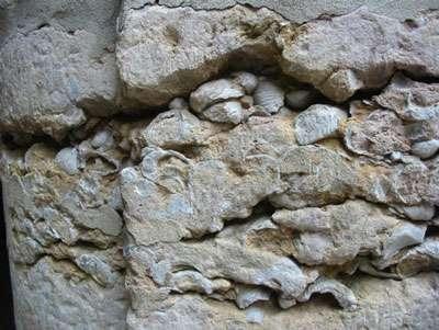Calcaire à gryphées. © DR