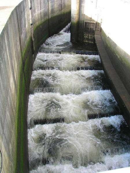 L'installation de passes à poissons sur les barrages tente de réduire l'impact de ces derniers sur les poissons migrateurs. Mais leur efficacité est encore approximative pour des coûts élevés. © Tony Hodge CC by-sa