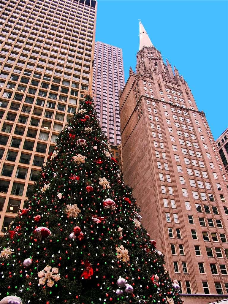 Le sapin de Nordmann est souvent utilisé en tant qu'arbre de Noël. © Fotophilius, Flickr by nc-sa 3.0