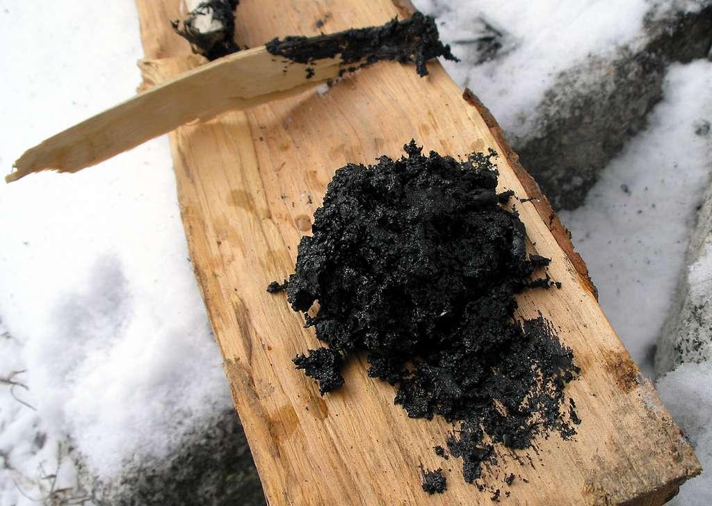Il y a quelques mois déjà, des chercheurs avaient trouvé de l'ADN dans des gommes fabriquées à partir de brai ou de goudron de boulot et retrouvées sur un site archéologique suédois. © Jorre, Wikimedia Commons, CC by-SA 3.0