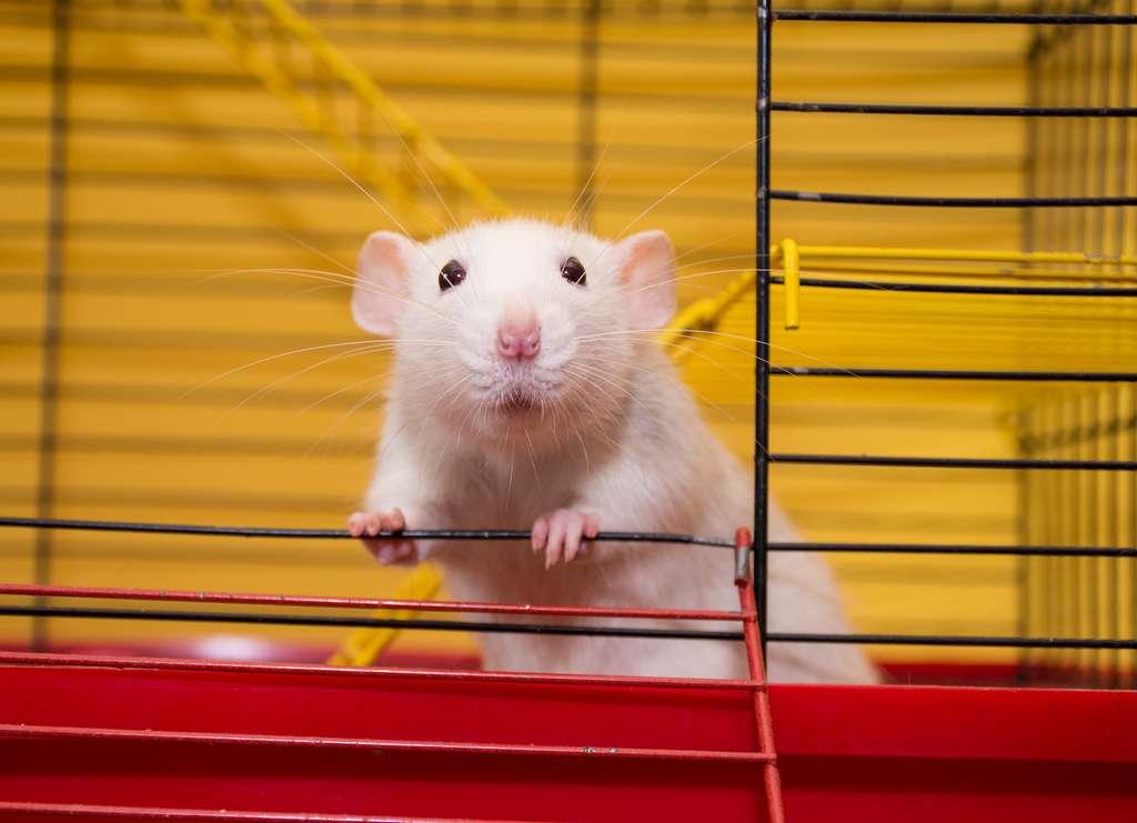 Ce traitement est effectif et sûr uniquement chez l'animal pour l'instant. © Karushova, Adobe Stock