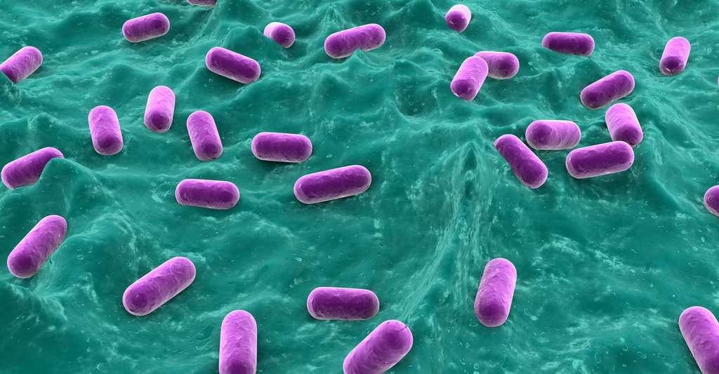 Zoom sur la biodiversité microbienne du lait. Ici, Lactobacillus. © Sebastian Kaulitzki, Fotolia
