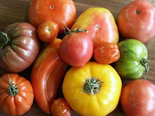 La tomate et ses nombreuses variétés
