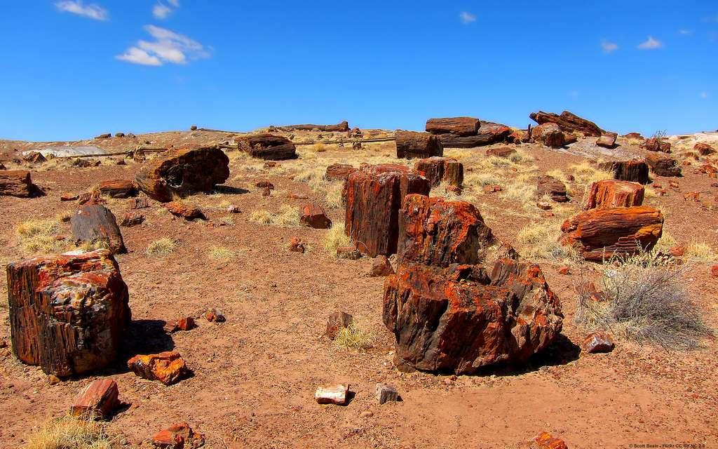 Le parc national de Petrified Forest