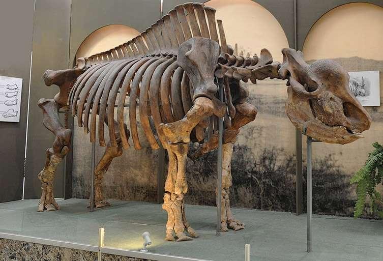 Bien qu'aucune corne de Elasmotherium sibiricum n'ait jamais été retrouvée, on estime qu'elle devait mesurer plus d'un mètre de long. © Igor Doronin/Kosintsev et al., 2018