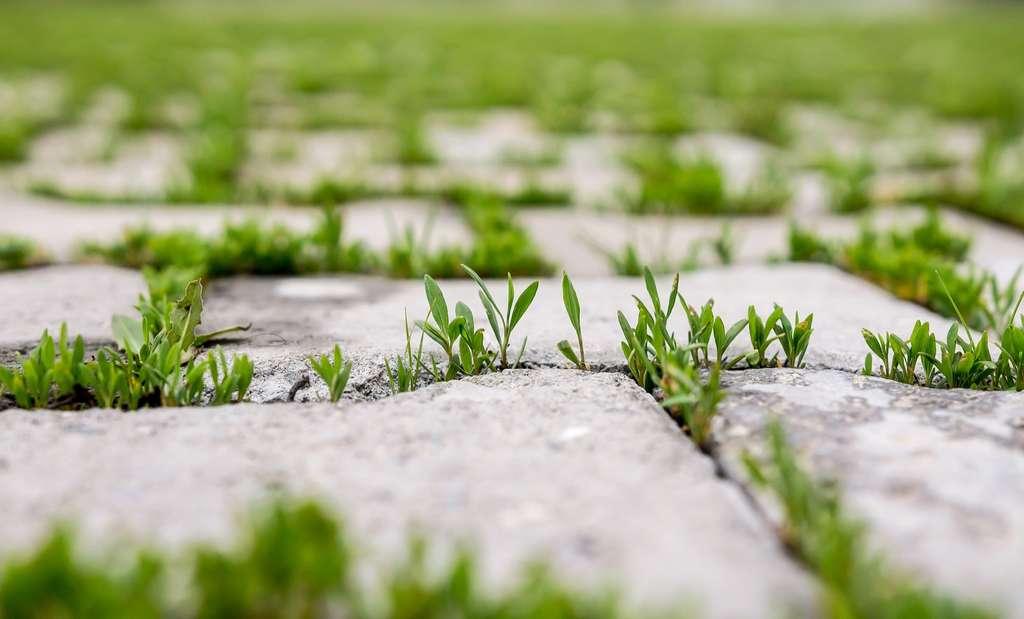 Ne vous laissez pas envahir par les mauvaises herbes. © kvdkz, Adobe Stock