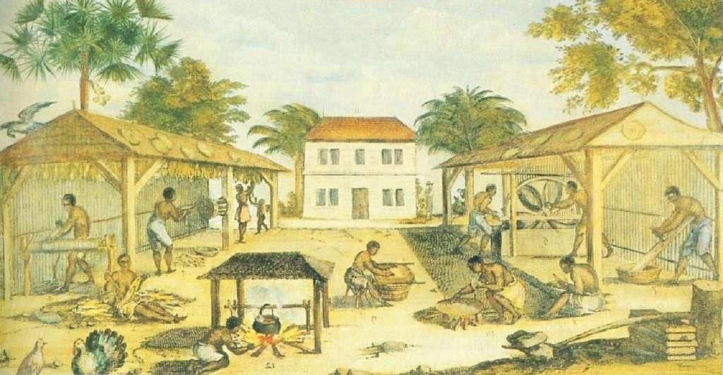 Esclaves travaillant dans une plantation de tabac en Virginie, tableau anonyme vers 1680. © Wikimedia Commons, domaine public.