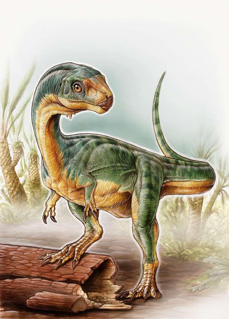Une reconstitution de l'aspect présumé de Chilesaurus diegosuarezi, qui montre clairement des mélanges de caractéristiques faisant penser à un T-Rex mais aussi qu'il était herbivore. © University of Birmingham