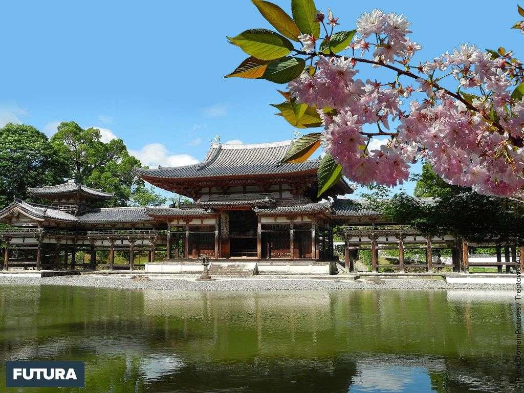 Sakura, les cerisiers en fleurs du Japon