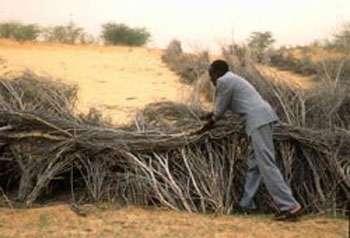 Construction de barrières pour empêcher l'avancée des dunes de sable, à Gour, en Afrique. Les palissades sont fabriquées avec des arbustes locaux ou des palmes séchées. © FAO, P.Cenini