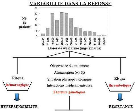 Source Philippe Beaune. U490 Inserm.