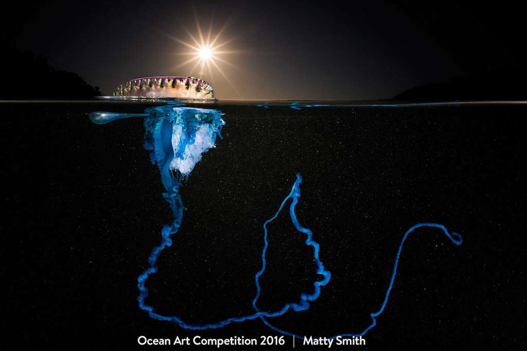 Une physalie (Physalia utriculus), un cnidaire siphonophore vivant accroché à la surface par son flotteur, déploie son fil de pêche au large des côtes du sud-est de l'Australie. © Matty Smith, Ocean Art Underwater Photo Competition