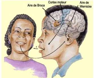 Cerveau et langage. L'aire de Broca est impliquée dans la production du langage, l'aire de Wernicke dans la compréhension. Source : http://lecerveau.mcgill.ca/flash/d/d_10/d_10_cr/d_10_cr_lan/d_10_cr_lan.html