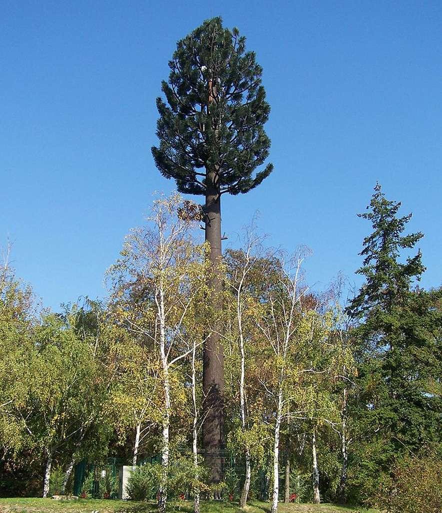 Les antennes relais de téléphonie mobile (BTS pour Base Transceiver Station en anglais) se sont peu à peu installées dans notre paysage. Certaines sont construites sous forme d'arbres, comme ici à Villepreux (Yvelines, France). © Henry Salomé, CC by-sa 3.0