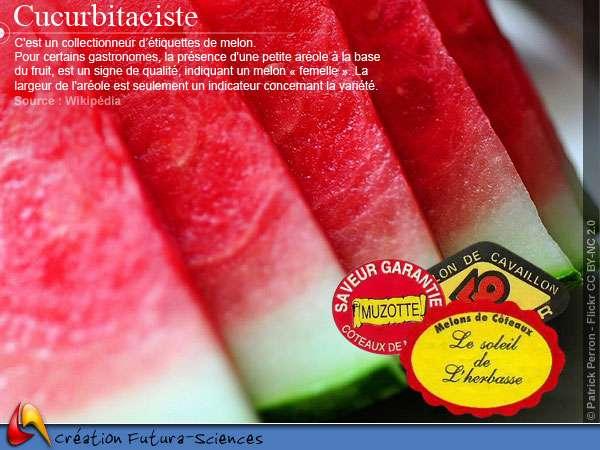 Cucurbitaciste - étiquette de melon