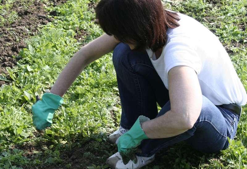 Dans un jardin, le désherbage manuel est nécessaire deux fois par mois. © Dame Cécile, Flickr, cc by nc sa 2.0