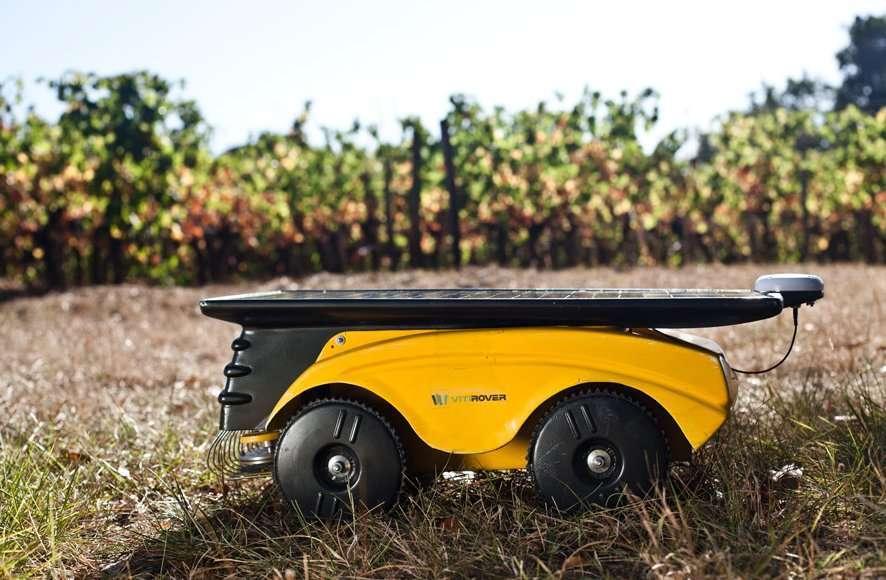 Le robot de Vitirover a commencé sa carrière dans les vignes. En troupeau, il permet aujourd'hui un service de désherbage sans produit chimique. © Vitirover