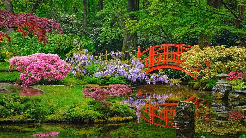 Le jardin japonais de Lady Daisy, en Hollande