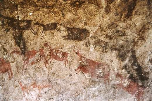 Figure 3 : troupeau de camélidés, Macusani (dép. de Puno). © R. Hostnig, reproduction et utilisation interdites