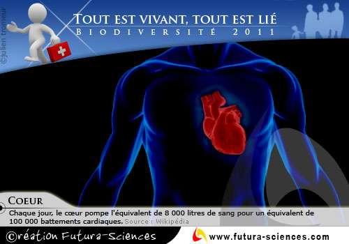 Tout est vivant : le coeur